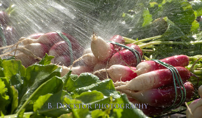 1110_Herondale-Sol Flower Farm_167