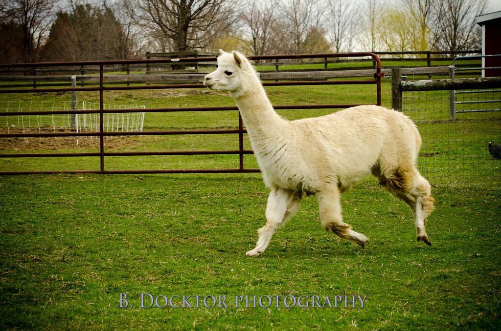 1304_Spruce Ridge Farm_063