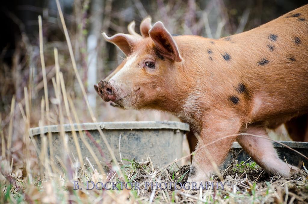 1304_Spruce Ridge Farm_091