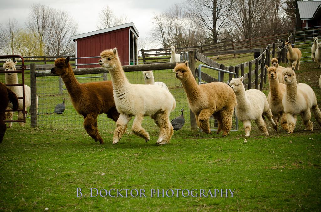 1304_Spruce Ridge Farm_067