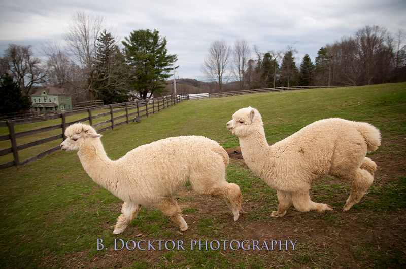 1304_Spruce Ridge Farm_171
