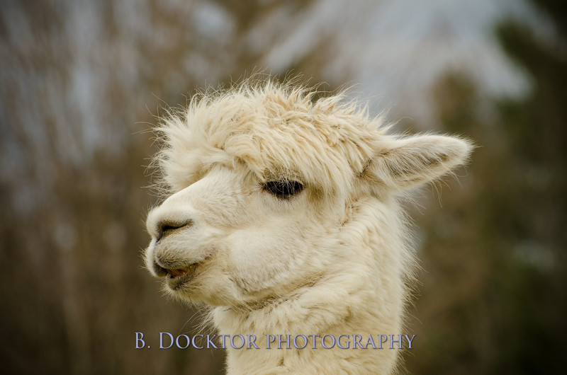 1304_Spruce Ridge Farm_036