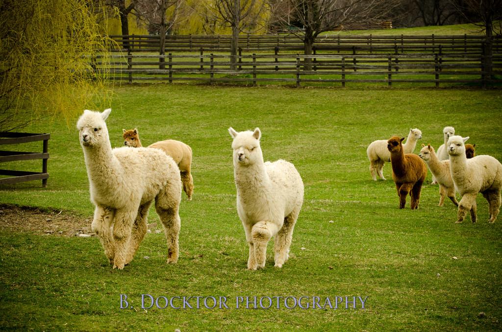 1304_Spruce Ridge Farm_007