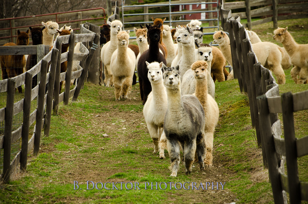 1304_Spruce Ridge Farm_058