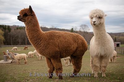 1304_Spruce Ridge Farm_178