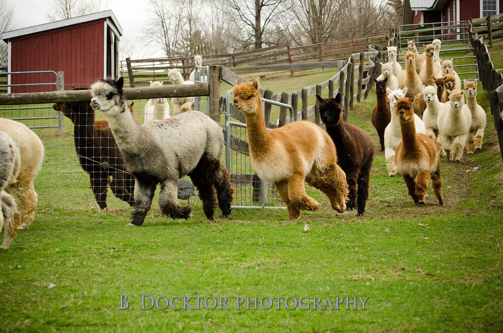 1304_Spruce Ridge Farm_065