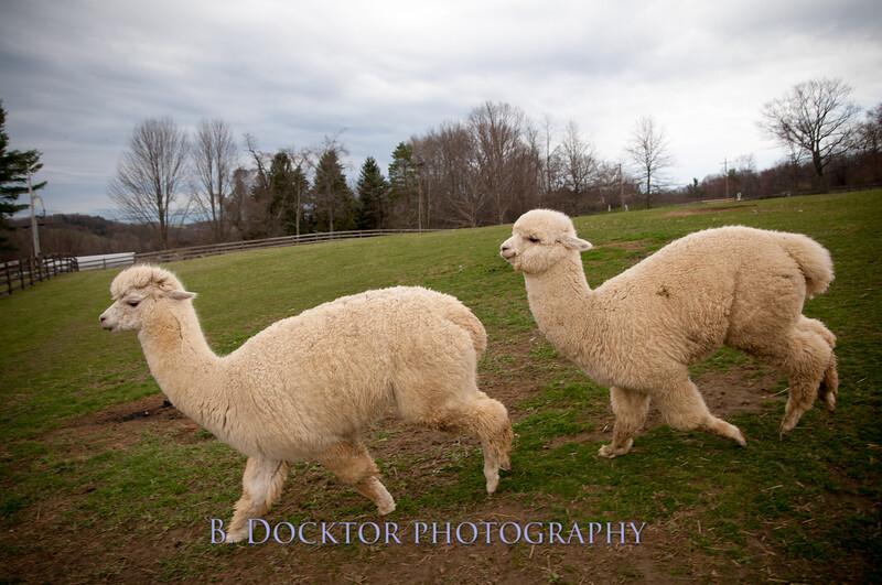 1304_Spruce Ridge Farm_170