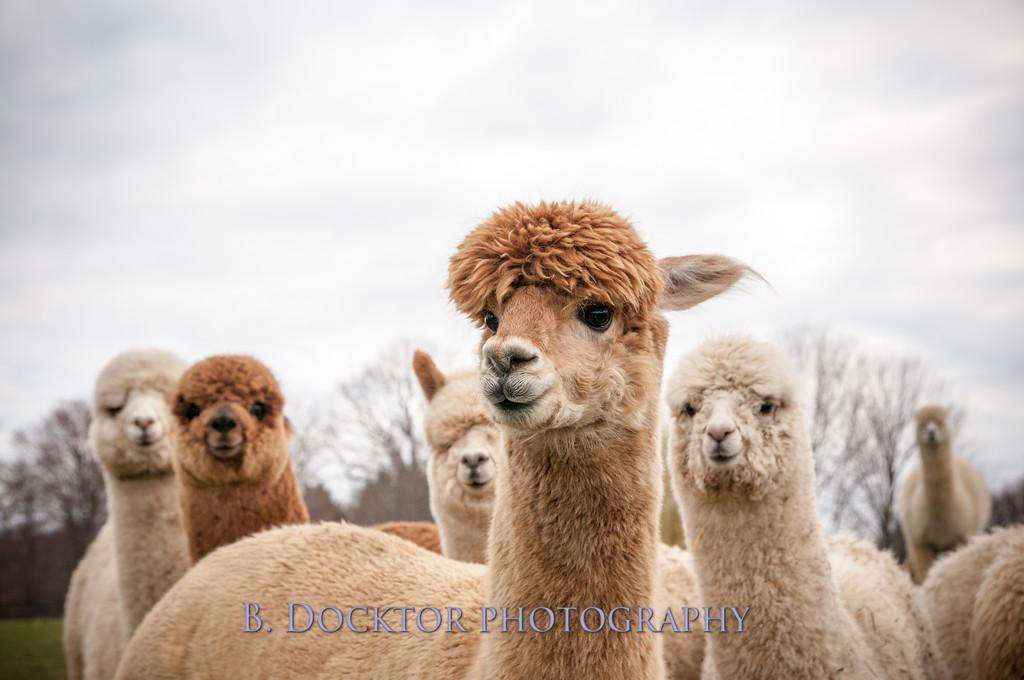 1304_Spruce Ridge Farm_159