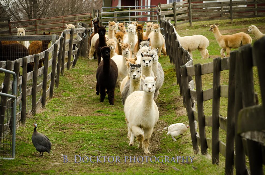 1304_Spruce Ridge Farm_059