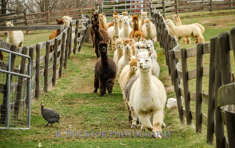 1304_Spruce Ridge Farm_061