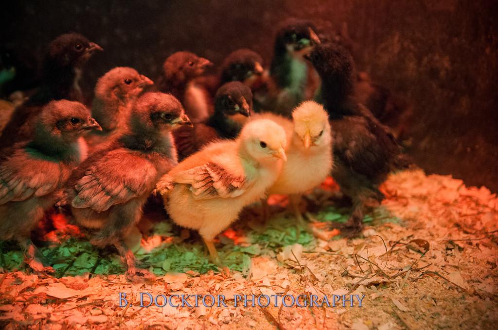 1304_Spruce Ridge Farm_187