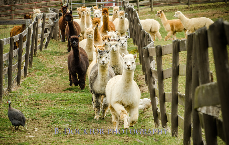 1304_Spruce Ridge Farm_060