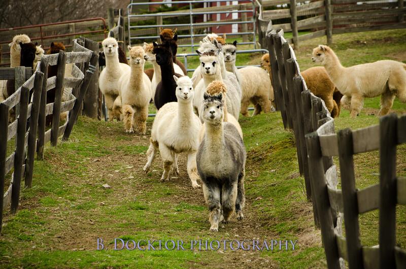 1304_Spruce Ridge Farm_057