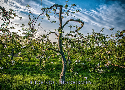 Thompson Finch Spring Orchard & fields-14