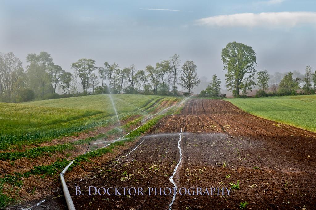1005_Thompson Finch Farm_002-2