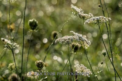 Thompson Finch aug 2017-176-Edit