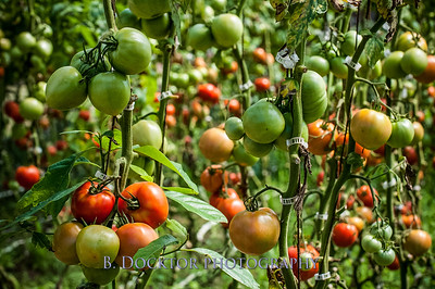 0908_Thompson Finch Farm_016-2