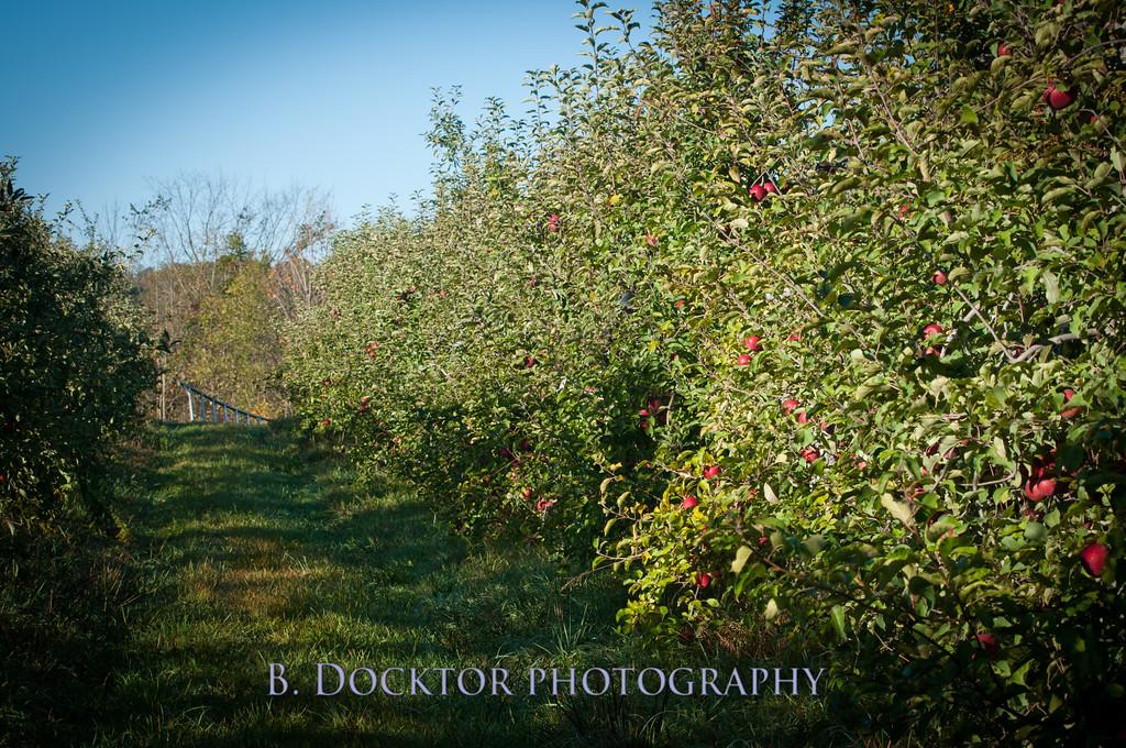 1010_Apples & fall views_046