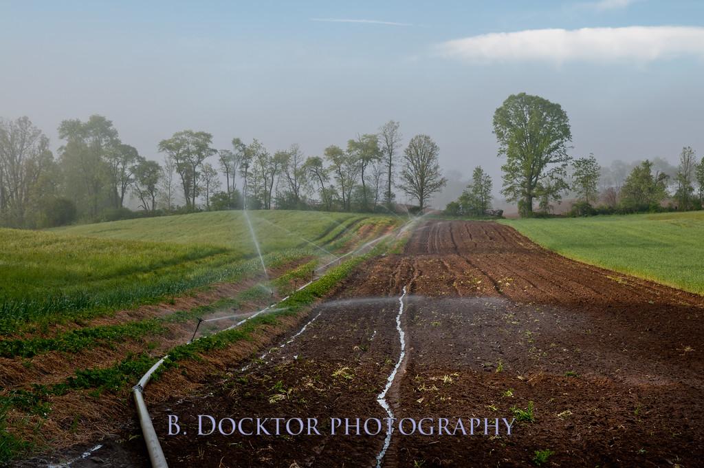 1005_Thompson Finch Farm_002