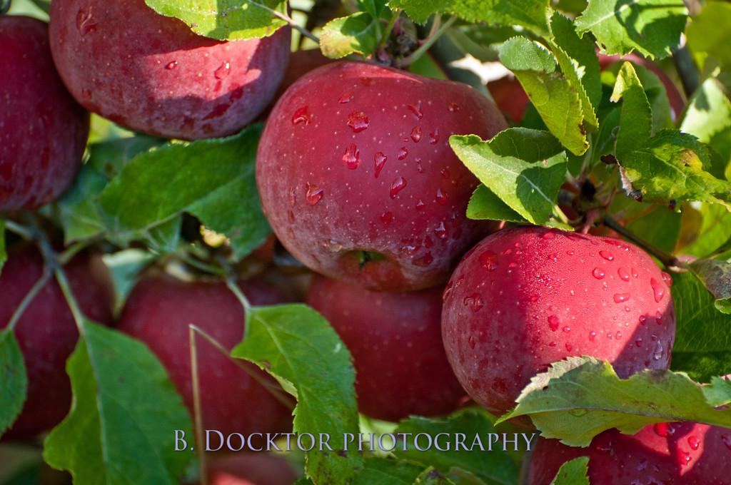 1010_Apples & fall views_037