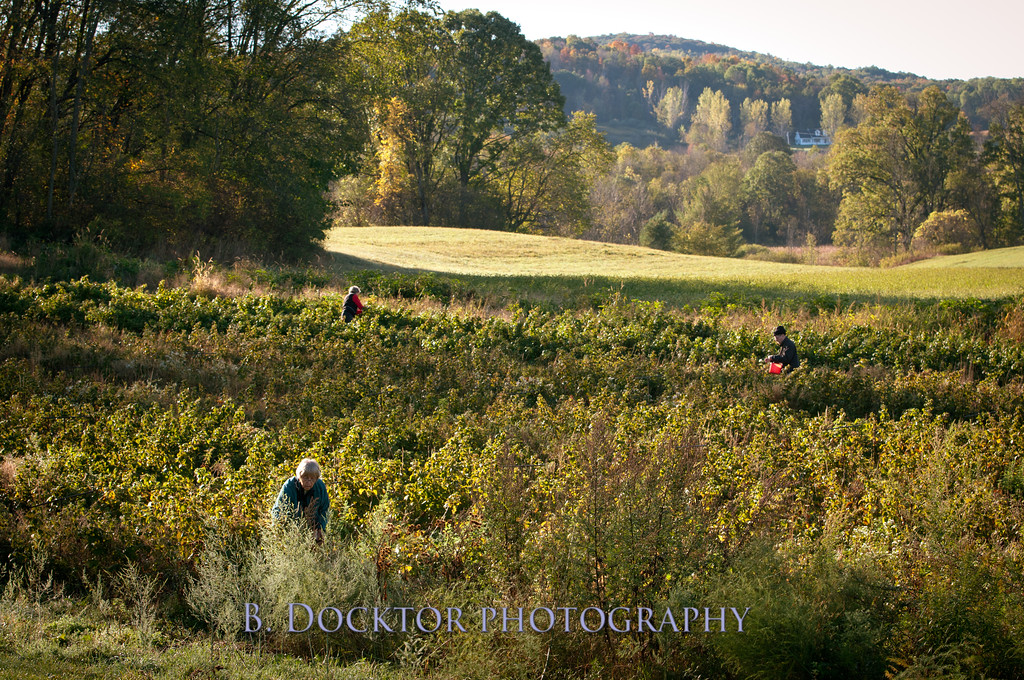 1010_Apples & fall views_054