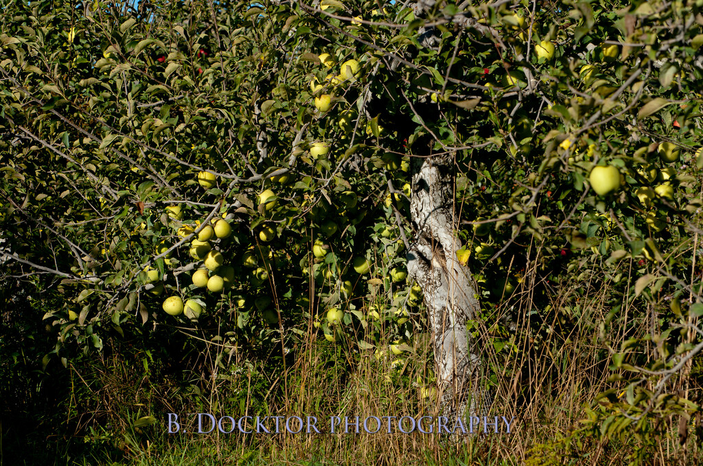 1010_Apples & fall views_047