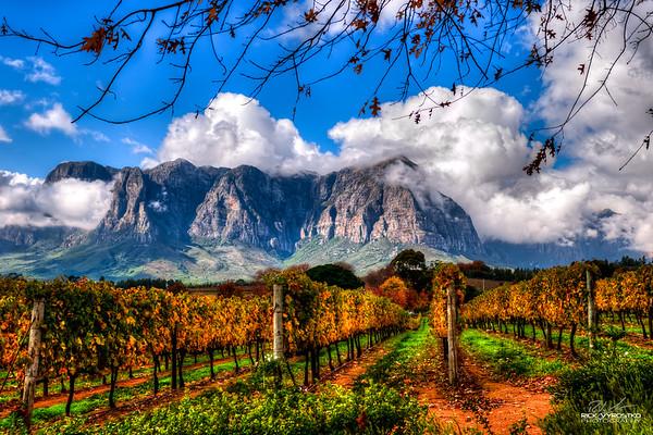 Stellenbosch Steve D-001-2