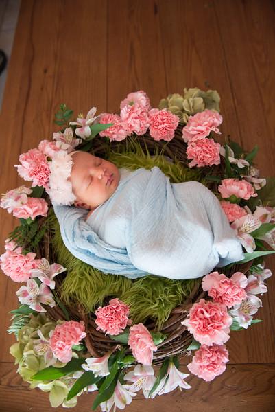 Baby Calliope