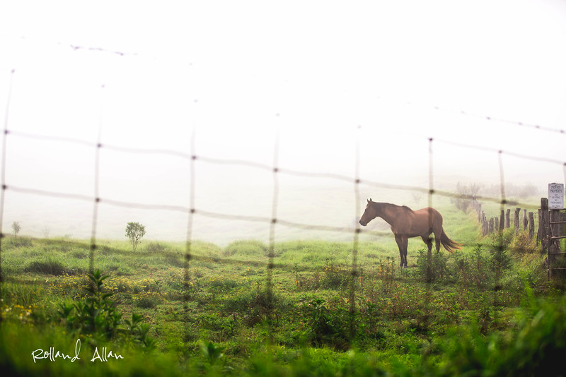 """Horse and the Dew"", Thompson Rd., Kula, Maui, HI"