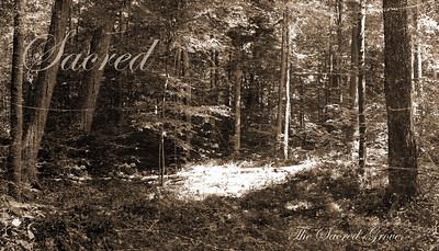 Sacred Grove