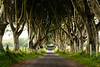 Dark Hedges 2-2