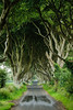 Dark Hedges 2-1