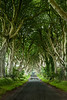 Dark Hedges 2-4