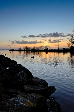 The swans enjoy the setting sun at Lough Neagh