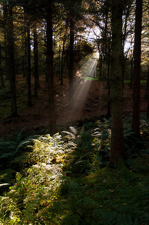 A shaft of light picks out the forest floor.
