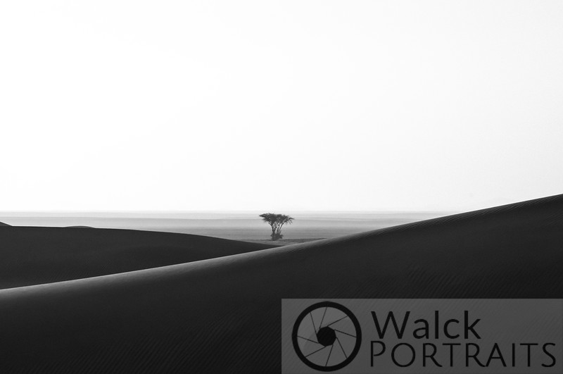 Lone Tree on the Sabkha 2