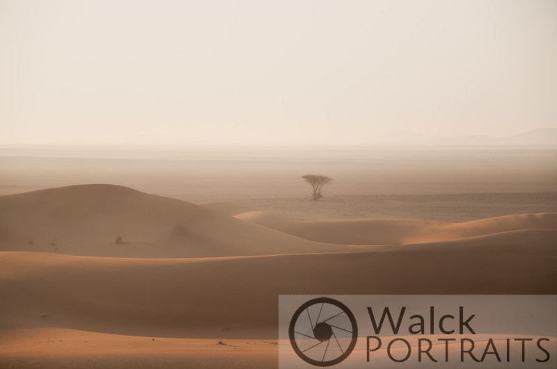 Lone Tree on the Sabkha 1