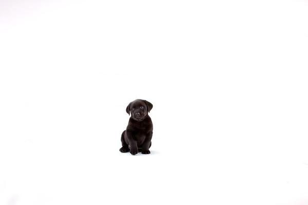 Miller Puppy