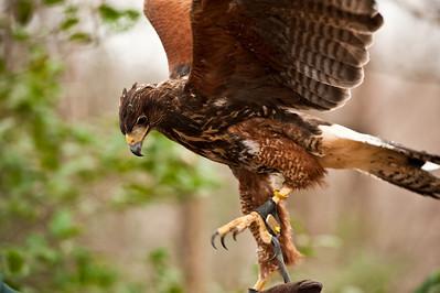 Raptor Conservancy of Virginia-27