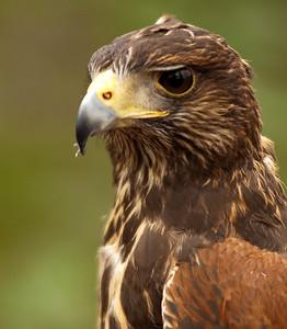 Raptor Conservancy of Virginia-24