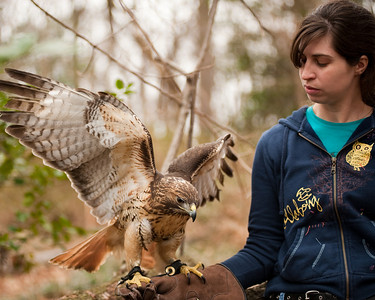 Raptor Conservancy of Virginia-43