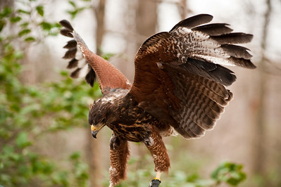 Raptor Conservancy of Virginia-29