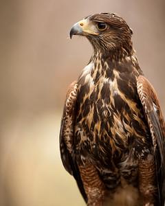 Raptor Conservancy of Virginia-19