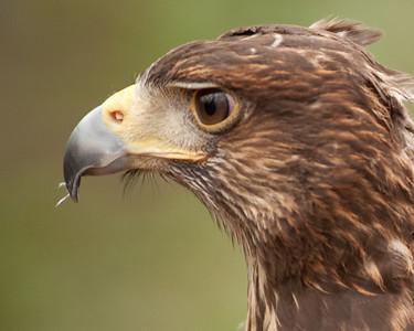 Raptor Conservancy of Virginia-25