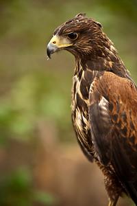 Raptor Conservancy of Virginia-22