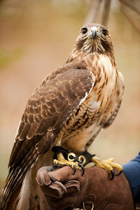 Raptor Conservancy of Virginia-37