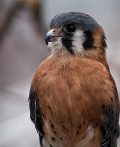 Raptor Conservancy of Virginia-9