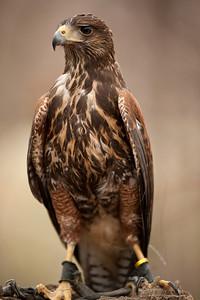 Raptor Conservancy of Virginia-20