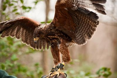 Raptor Conservancy of Virginia-28