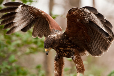 Raptor Conservancy of Virginia-30